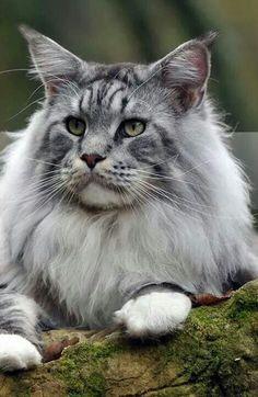 =^..^= Majestic!
