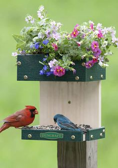 SIMPLE OUTDOOR BIRD FEEDERS MADE FROM HOUSE HOLD PRODCUTS | Home > Bird Feeders > All Bird Feeders > Blooming Combo Planter