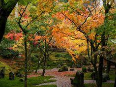 旅行者が選んだ!九州の人気紅葉名所ランキング Top10 | TripAdvisor Gallery