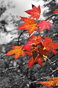 Autumn On Black And White Kaye Menner