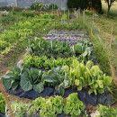 El huerto en Febrero | #Huerto urbano - Huerto ecológico ecoagricultor.com