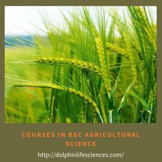 Agriculture science is the biological systems for the sustainable production of food and fiber. Dolphin(PG) College provides you courses in bsc agricultural science with four-year… Wallpaper Windows 10, Agricultural Science, Systems Biology, College Courses, We Are The Ones, Horticulture, Dolphins, Sustainability, Herbs
