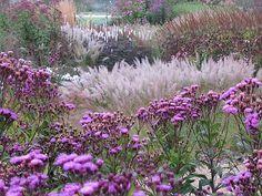 Piet Oudolf | Pensthorpe Millennium Garden