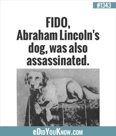 FIDO, Abraham Lincoln's dog, was also assassinated. The More You Know, Good To Know, Did You Know, Wtf Fun Facts, True Facts, Random Facts, Weird But True, Things To Know, Abraham Lincoln