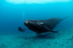 It's Nice That | Bryan Skerry's jaw-dropping photographs of whales underwater