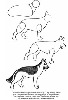 How to draw a German Shepherd
