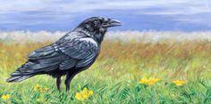 Raven 12 x acrylic on canvas Artist Anita Klein Equine Art, Canadian Artists, Western Art, Raven, Giclee Print, Paintings, Cartoon, Canvas, Prints