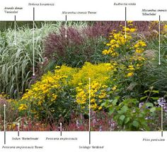 .Lovely, lush Plant combinations for cold hardy gardens from a Netherlands site, Almost all are grown in the US as well. Use the Latin names & look them up. Tuin & Landschap |
