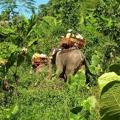 Sounds so fun! 2 Days: Trekking, Kayaking and Elephant Riding in Laos