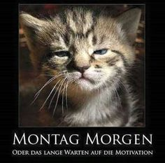 I dont hate mornings but the cat's face looks funny :D Funny Animal Pictures, Funny Images, Funny Animals, Cute Animals, Animal Pics, Random Pictures, Animal Captions, Funny Photos, Baby Animals