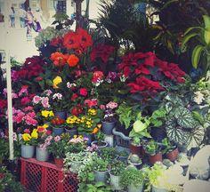 Flowers Market place, my beautiful city #Cuenca #Ecuador, a Heritage UNESCO city, my phone shot