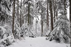 Winter Background 1 by Kuoma-stock