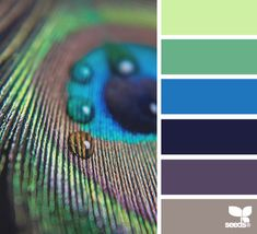 Here's the colour palette I was looking for! Colour palette: just to get some colour ideas peacock tones Peacock Color Scheme, Peacock Colors, Peacock Logo, Peacock Feathers, Peacock Decor, Peacock Bedroom, Peacock Nursery, Peacock Theme, Peacock Design