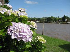 No falta nunca una hortensia a la orilla del rio...  www.aldelta.com.ar