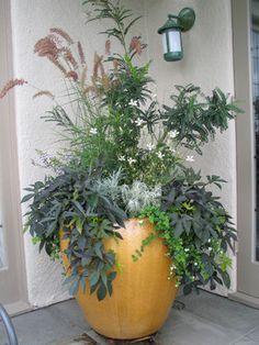Container Gardening - a contemporary patio by Exteriorscapes llc Plant Design, Patio Design, Garden Design, Landscaping Design, Outdoor Planters, Planter Pots, Clay Planter, Porch Planter, Planter Ideas