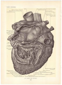 1899 Antique HEART Illustration