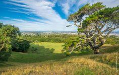 One Tree Hill - Cornwall Park, New Zealand