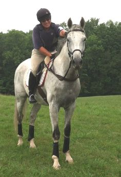 Stud Muffin poses proudly after completing cross-country in Old Chatham. OTTB at Atkindale.