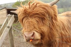Animals With Some Seriously Luscious Locks 2 - https://www.facebook.com/diplyofficial