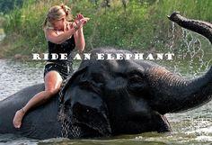 I want to ride on a elephant...