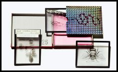 AW16 Invites: Gucci: We opened Gucci's mysterious invitation box for its menswear show with baited breath. Inside, it revealed a striking trio of scientific glass slides each adorned with its own specimen from Alessandro Michele's Gucci garden, including a snake and bumblebee (a nod to European nobility and Rome, where the Italian house is based and also where the insect is carved into buildings all over the city