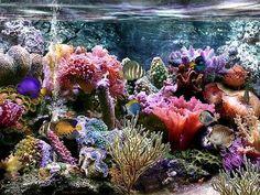 A saltwater aquarium