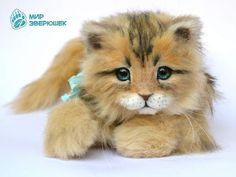 Murzik. Kitten. By Anastasia Arzhaeva - Bear Pile