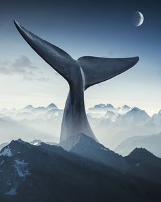 Digital artist justin peters creates surreal digital art to bring imanigary world to life Surreal Artwork, Surreal Photos, Photomontage, Pablo Picasso, Montain Tattoo, Justin Peters, Whale Drawing, Great Whale, Whale Tattoos