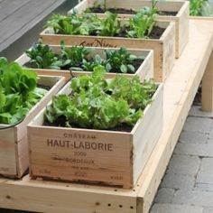 Wine box herb garden...great idea if you don't have a large yard!
