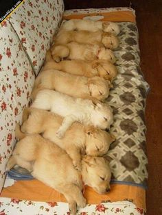 Puppies Lined Up Sleeping | Click the link to view full image and description : )