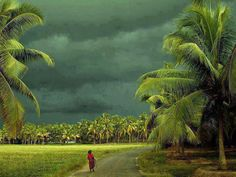 reportages: INDIA, il monsone distrugge i raccolti, 610 agrico...