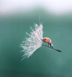 #Ladybird Lands with Style..  Hey honey, ya my flight is right on schedule.  I'll be home for dinner.