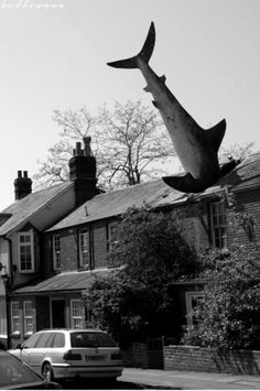 [  http://pinterest.com/toddrsmith/boards/  ]  - The Headington Shark, a rooftop sculpture, 2 New High Street, Headington, Oxford, England UK. - [  #S0FT  ]