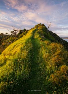 A Beginner's Guide to New Zealand's Bay of Islands  - http://7ww.org/travel-articles/a-beginners-guide-to-new-zealands-bay-of-islands/ #travel #BayOfIslands, #NewZealand