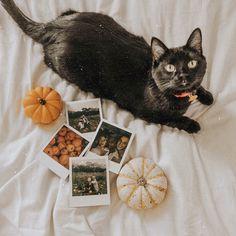 VSCO - alexgowon - f a v s - Halloween Halloween Inspo, Halloween Season, Fall Halloween, Vintage Halloween, Vsco, Autumn Aesthetic, Autumn Cozy, Spooky Scary, Mardi Gras