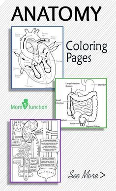 Top 10 Anatomy Coloring Pages