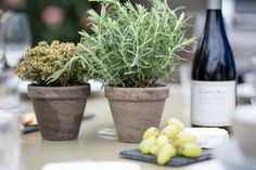 There's nothing like greenery to bring warmth to a space. Placing a cluster of pot plants on your table not only looks great, it will fill the air with the Summery scent of fresh herbs. Pot Plants, Outdoor Entertaining, Fresh Herbs, Greenery, Outdoor Living, Fill, Planter Pots, Space, Table