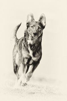 Old-fashioned dog photo by Elke Vogelsang on 500px