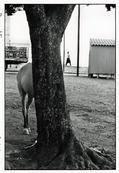 **SIGNED** - Erwitt - BRAZIL. Bahia. 1963. © Elliott Erwitt/Magnum Photos