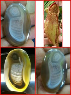 Pic Agate. Nepenthes Flower, Lucky Stone Agate.
