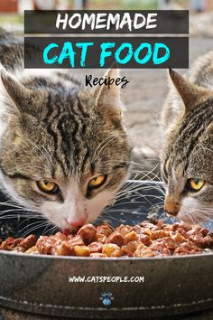 Healthy Cat Food, Stay Healthy, Homemade Cat Food, Cat Fence, Outdoor Cat Enclosure, Cat Nutrition, Cat Towers, Kitten Care, Cat Dog