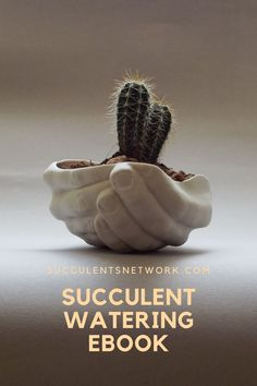 Over watering is a killer! Are your succulents and cacti dying because of wrong watering? This watering ebook explains everything about watering, what effects the plant, and the environment around your succulents. How To Water Succulents, Watering Succulents, With Love, Journey, Do You Need, Plant Care, Ecology, No Worries, Environment