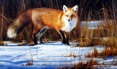 Artist Edward Aldrich Unframed Red Fox Print Fox on the Run   WildlifePrints.com