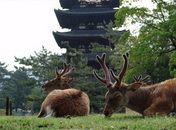 A park in the ancient city of Nara, Japan. The deer and the architecture really complement each other.