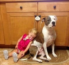 the look on the dog's face ! priceless !