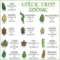Celtic tree zodiac ... and I love birch trees!