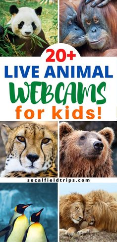 Do your kids love animals or are you teaching a lesson about animals and their habitats at school? Here is a list of 20 live animal webcams that are sure to make your students even more excited about learning! Kids Learning Activities, Science Activities, Fun Learning, Preschool Activities, Teaching Science, Live Animals, Zoo Animals, Virtual Field Trips, Kindergarten