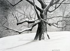 The Old Tree Drawing  - The Old Tree Fine Art Print
