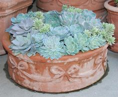 I love the soft shades of blue and the terracotta container.