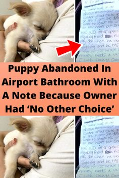 Puppy #Abandoned In Airport #Bathroom With A Note Because #Owner Had 'No Other #Choice'